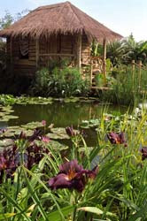 Hampton Court Flower Show - Hot Springs Garden 2006